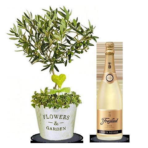 Olivenbaum mit Champagner