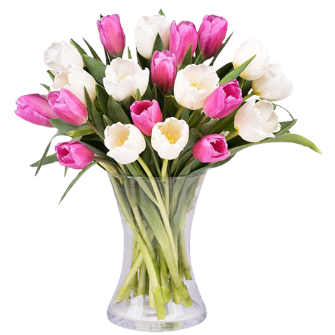 Dawnrise: Pink and White Tulips