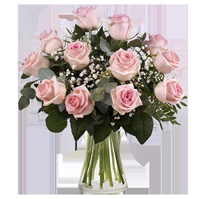 Segreto Rosa: 12 Rose Rosa