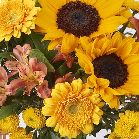 Семиньяк: подсолнухи и хризантемы