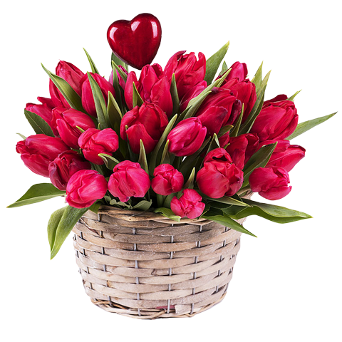 Spring Kiss: Red Tulips