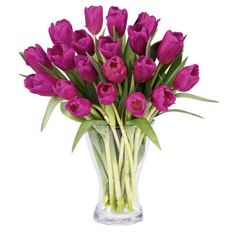 Inspiración: 20 Tulipanes Morados
