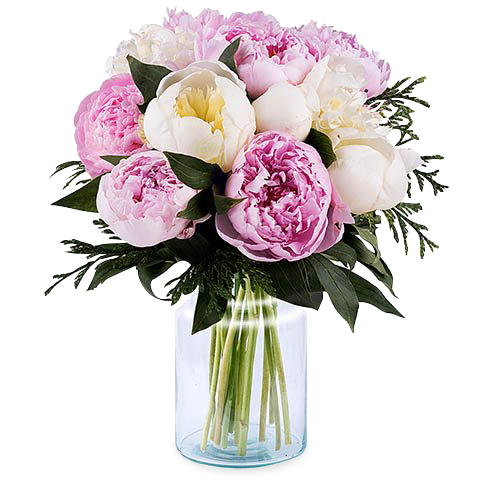 Vintage Freshness: Pink and White Peonies