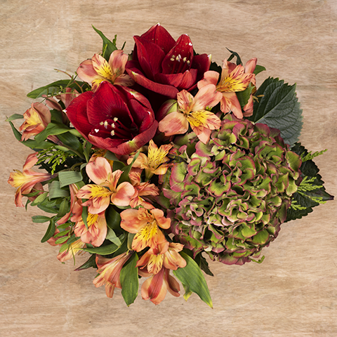 Autumnal Warmth: Amaryllis and Hydrangea