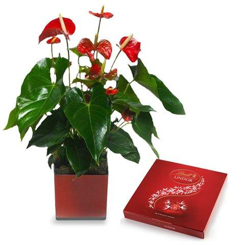 Sweet Hearts: Anthurium and Chocolates