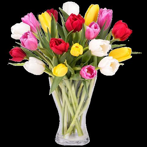 Bunter Frühling: 30 Gemischte Tulpen