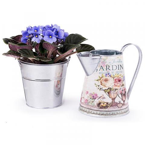 Garden of Wonders: Blue Violet