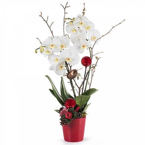 Weißer Schnee: Orchidee mit Dekoration